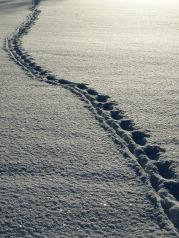 snow-69830_1280
